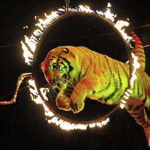 Цирки Владивостока