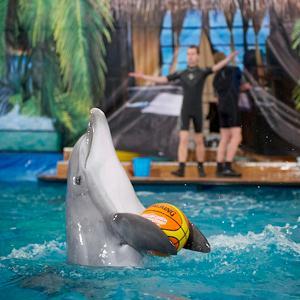 Дельфинарии, океанариумы Владивостока