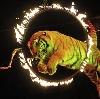 Цирки в Владивостоке