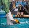 Дельфинарии, океанариумы в Владивостоке