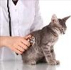 Ветеринарные клиники в Владивостоке